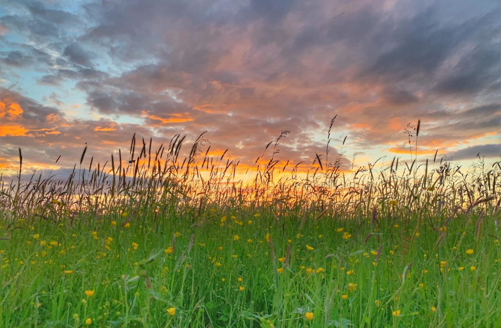 Wild flowers in foreground with sunset behind